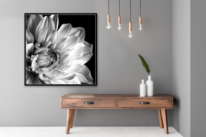 Fine art print of a dahlia - FIDELITY on your wall