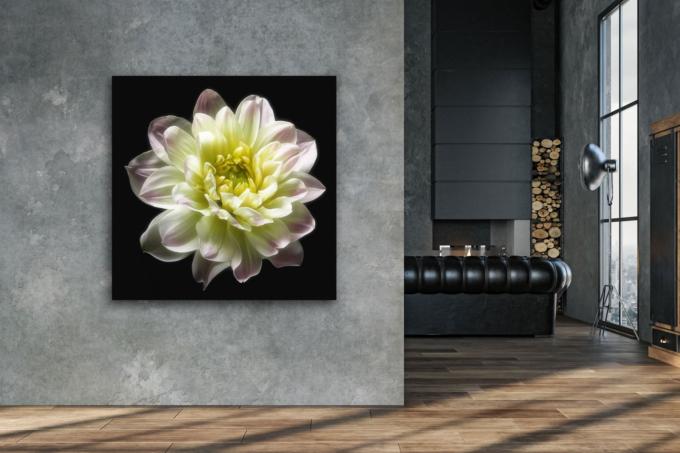 Fine art print of a dahlia - ALL HEART on your wall