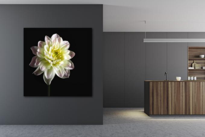 Fine art print of a dahlia - BOUNTEOUS on your wall